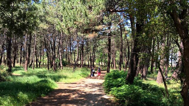 Parque Natural de Carrión, Illa de Aurousa