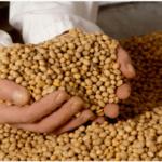 Beneficios de la soja en la cosmética